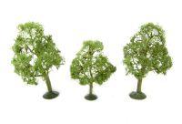 "3"" - 4"" Elm Trees - Pack Of 3"